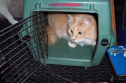 Picture of Cat in Carrier, photo by Kymberly