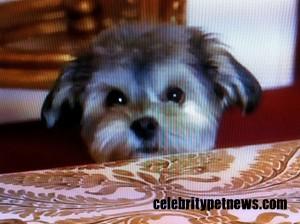 Photo of Jackpot Maloof RHOBH Celebrity Pet News