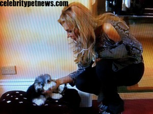 Photo of Jackpot and Adrienne Maloof Chewy Vuitton Bed