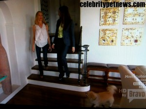 Photo of Taylor Armstrong Life Coach Melanie Pups