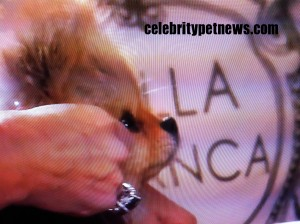 Photo of Giggy Vanderpump Villa Blanca Celebrity Pet News