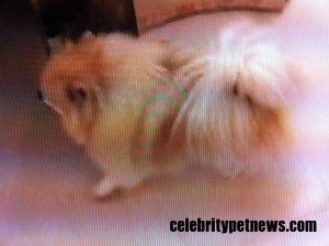 Photo of Pikachu Celebrity Pet News