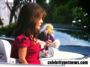 Photo of Lisa Vanderpump Giggy RHOBH Celebrity Pet News