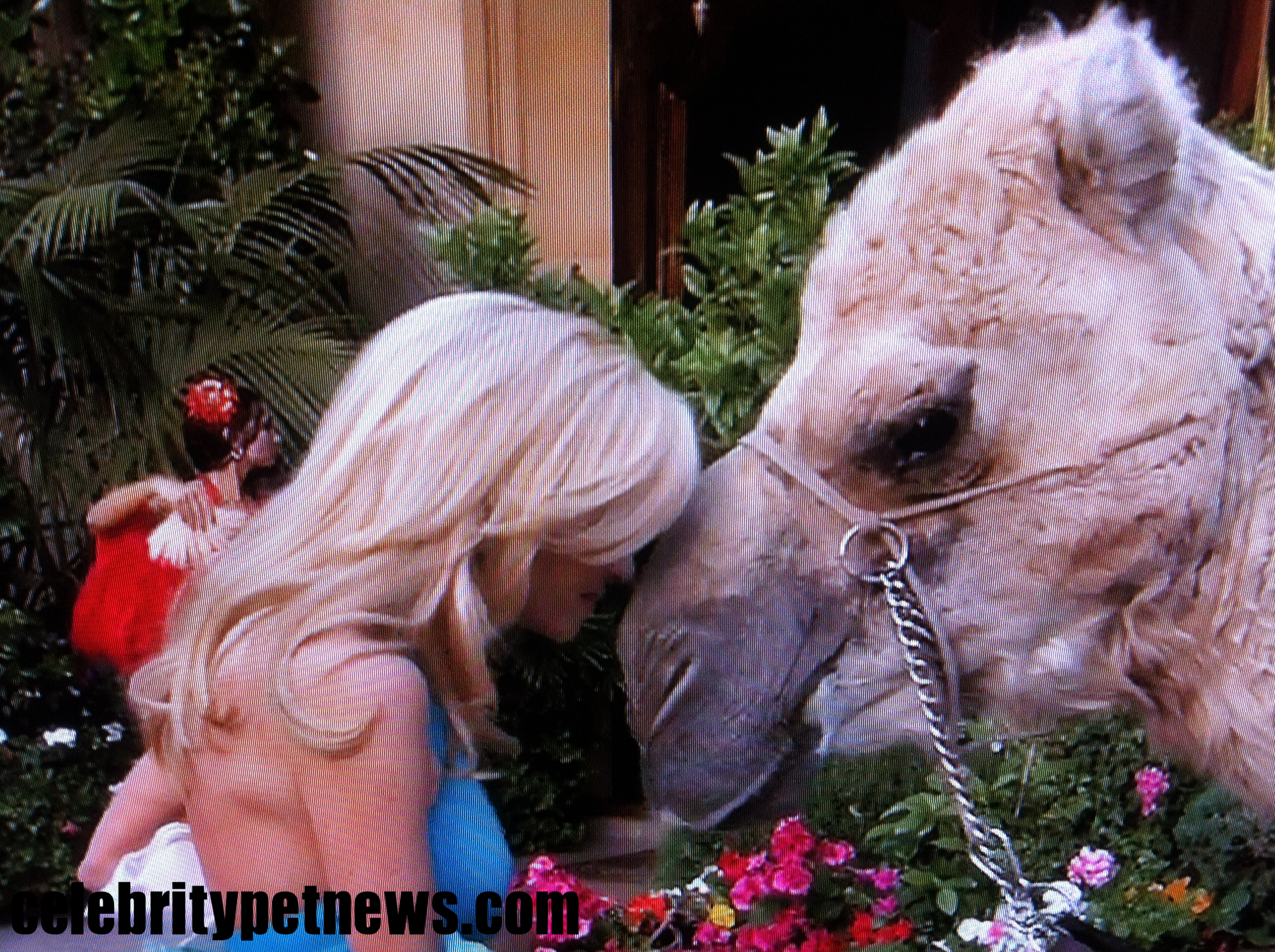 Camille gets very up close and personal with the camel, who leans in