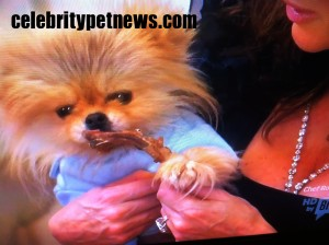 Photo of Giggy Lisa Vanderpump lambchop RHOBH CPN