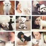 Thumbnail image for Demi Lovato Suffers Loss of Beloved Dog from Coyote Attack
