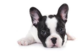 madonna-birthday-gift-dog.lg