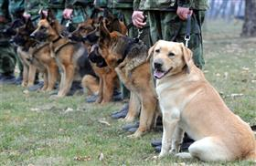 army-dogs-veterans-day.lg