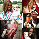 Thumbnail image for Serena Williams Makes a Quality-of-Life Decision in Putting Her Dog to Sleep